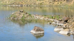 Beautiful lake in summer with basalt rocks, stones, green grass Stock Footage