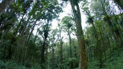 Abstract Fisheye View of Trees in a Tropical Forest Wilderness, with Sound Stock Footage