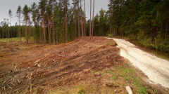 The tall trees on the side of the road in Ida-Virumaa Stock Footage
