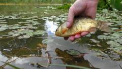 Fisherman releasing fish into the water Stock Footage