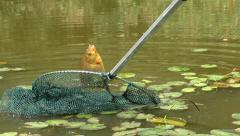 Fisherman uses net to pull fish out of water Stock Footage