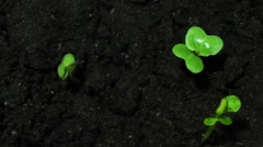 Young Green Sprouts On Black Organic Soil Stock Footage