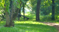 Play Flies In A Beautiful Nature Stock Footage