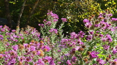 Purple Wildflowers in the Forest, 4K Stock Footage
