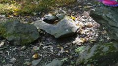 Child Jumping off Rock in Forest in Slow Motion Stock Footage
