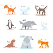 Arctic and Antarctic Animals, Penguin. Vector Illustration - stock illustration