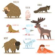 Arctic and Antarctic Animals, Birds. Vector Illustration Stock Illustration