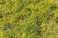 Stock Photo of Moss and grass texture