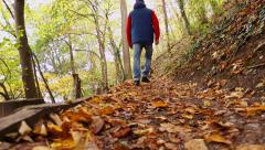 Dog walk autumn forest path Stock Footage