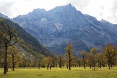 Stock Photo of Grosser Ahornboden autumn trees in front of mountain range autumn leaves