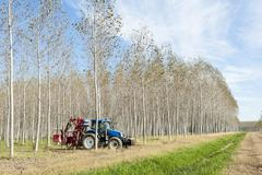 Poplar grove and tractor - stock photo