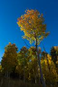 Forest in the fall season with yellow leaves - stock photo