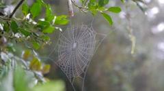 Spider web morning sunlight Stock Footage