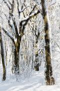 Snowy winter forest, seasonal natural scene Stock Photos