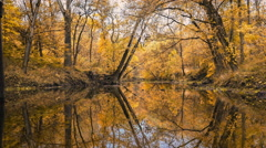Ripples on Water in Autumn Woods by Stream Background Stock Footage
