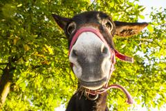 Funny donkey stares at the camera Stock Photos