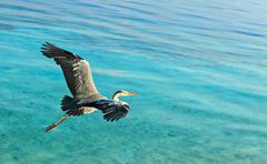The Bird's Flight, Maldives, The Indian Ocean - stock photo