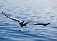 Heron's flight - stock photo