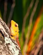 Lizard sitting on a tree trunk in troical forest and watches - stock photo
