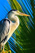 Heron is on the palm tree, Maldives - stock photo
