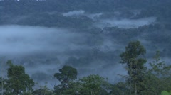 Morning mist over rainforest canopy 2 Stock Footage