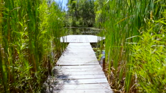 Wooden pier over pond lake with lily pads - stock footage