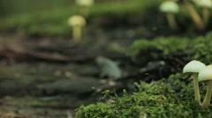 Mushrooms Growing on Green Moss Stock Footage