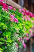 Flowers on The Chapel Bridge in Lucerne - stock photo