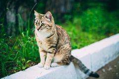 Stock Photo of Cute Tabby Gray Cat Kitten