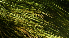 sway of grass under water - stock footage