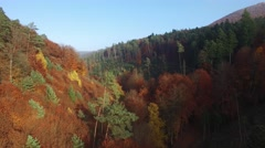 Flight in the the palatina forest Stock Footage