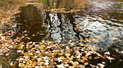 Leaves floating in the water Stock Footage