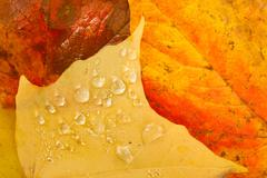 Leaves Fallen Winter Nature Ground Autumn Season Change Dew Drops - stock photo