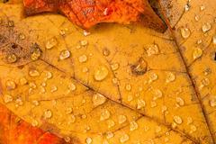 Stock Photo of Leaves Fallen Winter Nature Ground Autumn Season Change Dew Drops