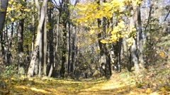 Beautiful leaf fall in autumn in a park or forest Stock Footage