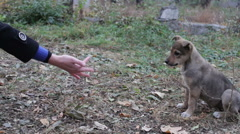 Woman feeds the homeless puppies on the street Stock Footage
