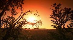 Sunset time-lapse behind thorns - stock footage