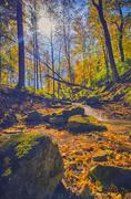 Fall forest view, Ontario, Canada - stock photo