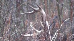Deer monster whitetail buck closeup November rain Stock Footage