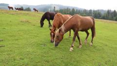 Beautiful horses on the pasture Stock Footage