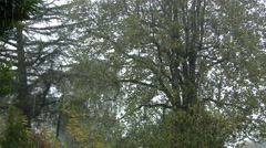 Rainy Day Trees Stock Footage