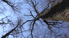 High Angle of View of Giant Trees. Blue Sky. 4K UltraHD, UHD Stock Footage