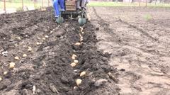 Motorized Seeding Process. Dropping of Potato. 4K UltraHD, UHD Stock Footage