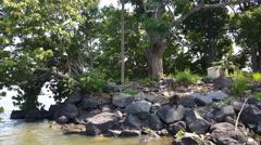 Monkey island on lake of Nicaragua Stock Footage
