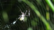 Stock Video Footage of 4K  Spider Secretes Zigzag Silky Structures Onto Web Spectacular Close Up