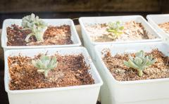 Cactus plants in minimal garden Stock Photos