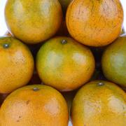Lose-up image of group oranges tropical fruit Stock Photos