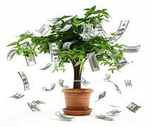Money tree in the pot - stock illustration