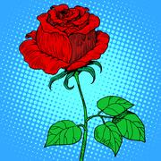Rose red flower Stock Illustration