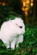 White Funny Bunny Rabbit On Green Grass Stock Photos